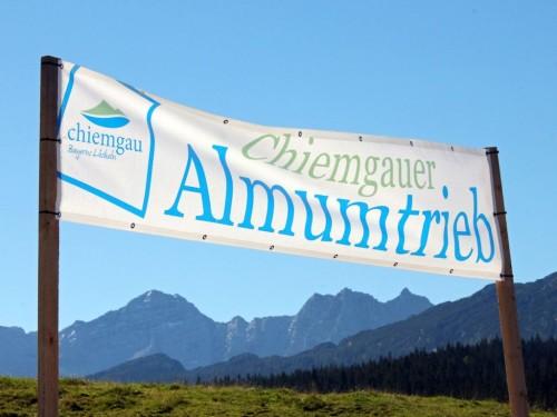 Chiemgauer Almumtrieb am 06.09.2020