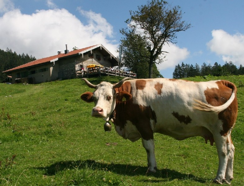 Wagneralm mit Kuh