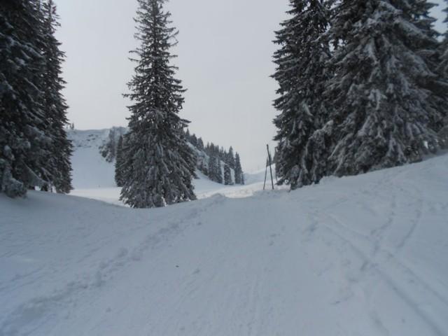 Rodelbahn Riesenhütte